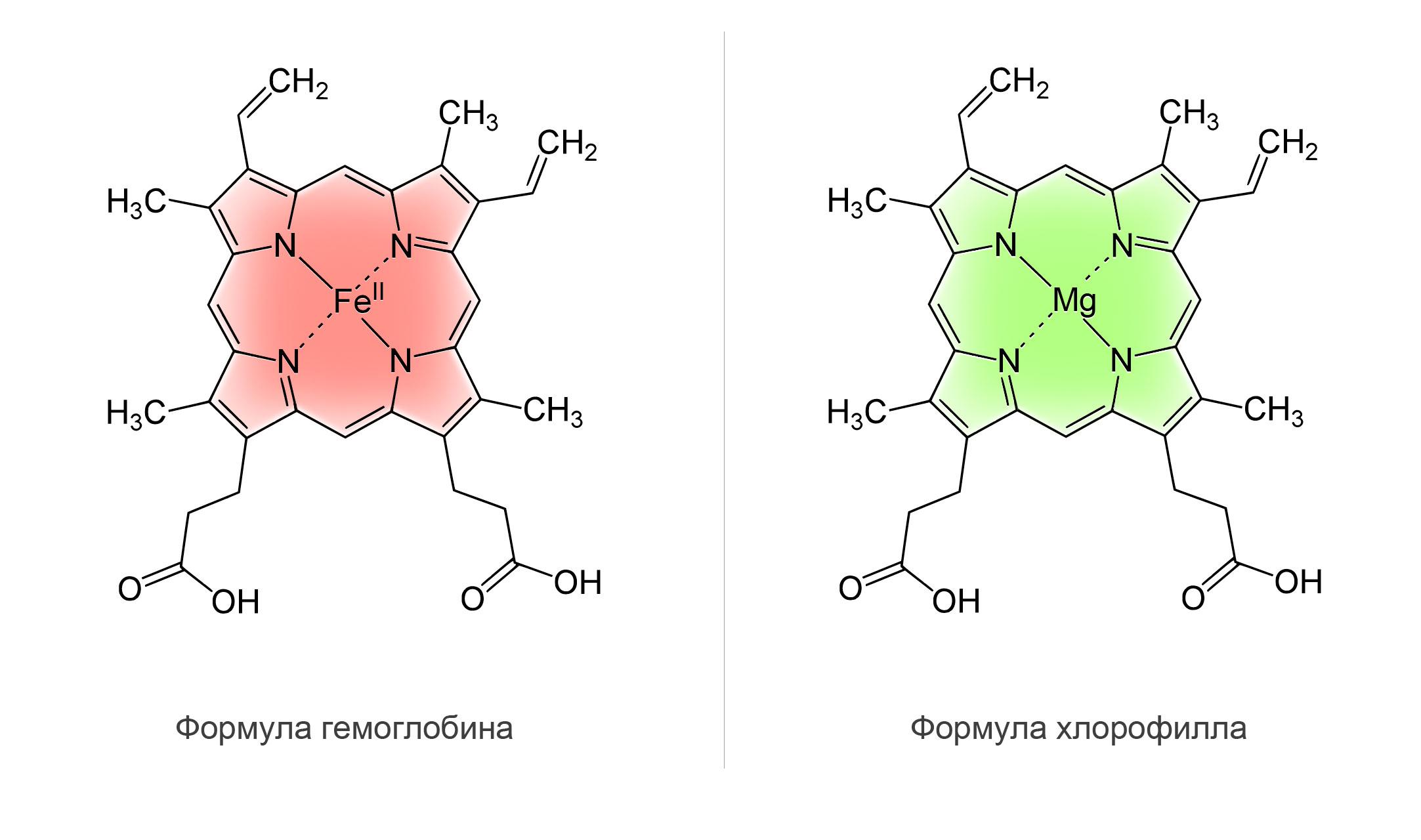 Хлорофилл имеет схожую структуру с гемоглобином Хлорофилл имеет схожую структуру с гемоглобином