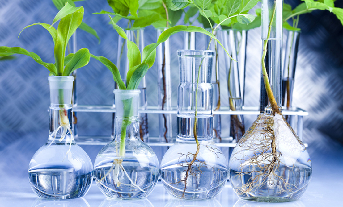 растительная пища богатая хлорофиллом