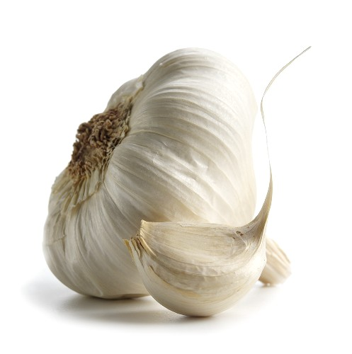 HP Garlic