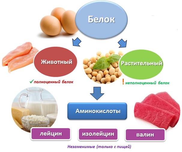 Free Amino Acids