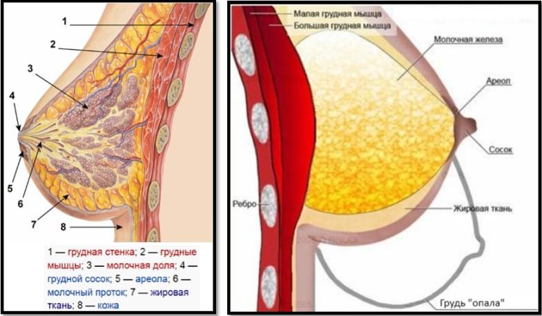 упражнения сжигающие жир на животе для мужчин